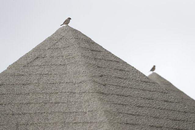Birds rest on top of roofs covered in volcanic-ash at a park near Taal volcano in Tagaytay, Cavite province, southern Philippines on Sunday January 19, 2020. (Photo by Aaron Favila/AP Photo)
