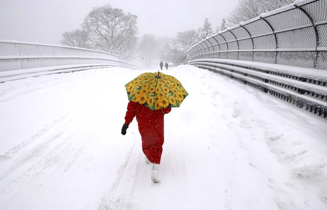 Justine Crowley walks on Weston Road during a snow storm in Wellesley, Mass., January 12, 2011. (Photo by Bill Greene/The Boston Globe)