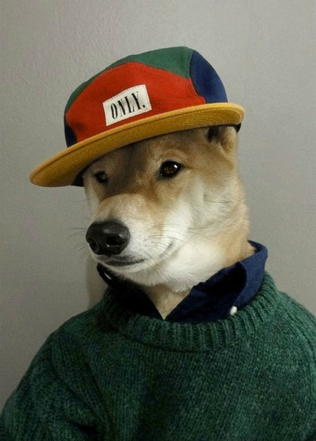 Menswear Dog By  David Fung