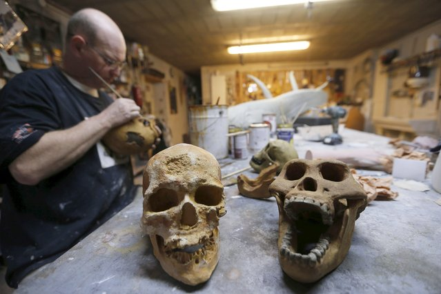 A worker paints a replica of cro-magnon skulls in the workshop of Belgian animal sculptor Emmanuel Janssens Casteels, in Prayssas December 3, 2014. (Photo by Regis Duvignau/Reuters)