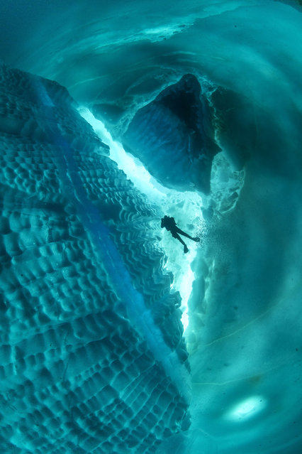 In some of the pictures, divers are swimming around an underwater iceberg. (Photo by Franco Banfi/Caters News Agency)