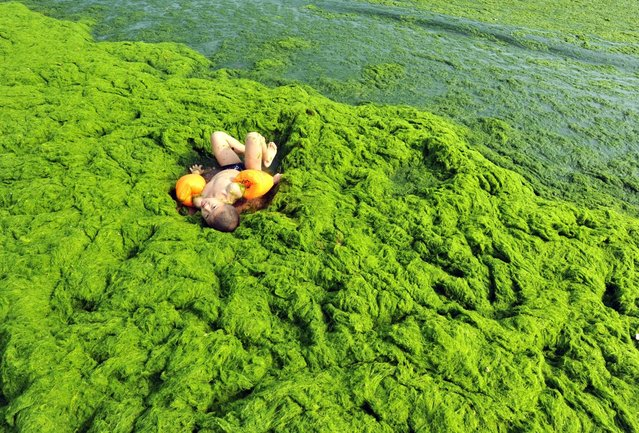 Tourists play at a beach covered by a thick layer of green algae in Qingdao, China, on July 3, 2013. A large quantity of non-poisonous green seaweed, enteromorpha prolifera, hit China's Qingdao coast last month. More than 20,000 tons of such seaweed has been removed from the city's beaches. This has now become an annual summer event. (Photo by Whitehotpix/ZumaPress.com)