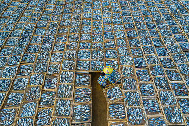 Category winner, open competition, travel. Drying Fish, a photograph of a lone woman surrounded by hundreds of trays of drying fish in the Long Hai fish market in Ba Ria-Vung Tau, Vietnam. Taken from above, the pattern of the fish in trays resembles a large piece of fabric with the woman seemingly weaving it all together. (Photo by Khanh Phan/Sony World Photography Awards)