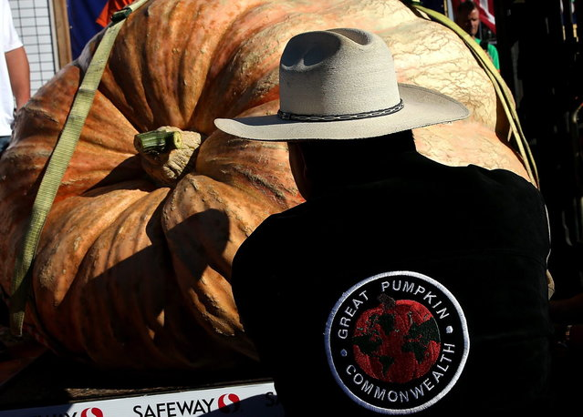 Leonardo Urena moves his pumpkin onto a scale during the 40th Annual Safeway World Championship Pumpkin Weigh-Off on October 14, 2013 in Half Moon Bay, California. Gary Miller of Napa, California won the 40th Annual Safeway World Championship Pumpkin Weigh-Offgigantic pumpkin with a gigantic pumpkin that weighed in at 1,985 pounds. Miller took home a cash prize of $11,910, or $6.00 a pound. (Photo by Justin Sullivan/AFP Photo)