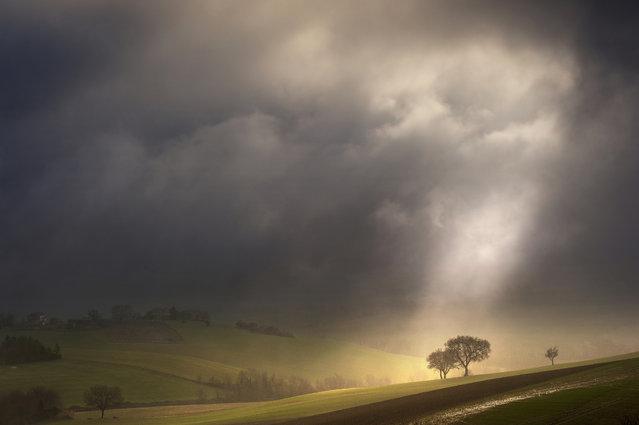 """""""Raggio sugli alberi"""". (Photo and caption by Massimo Feliziani)"""
