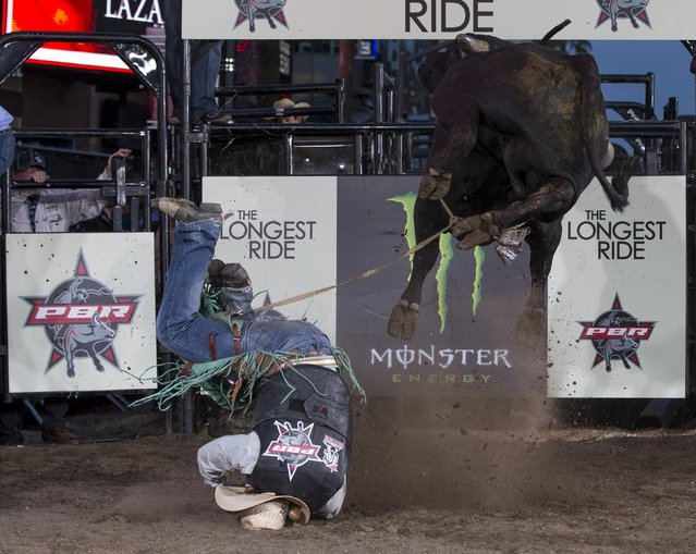 """A professional bull rider competes at the premiere of """"The Longest Ride"""" at the TCL Chinese theatre in Hollywood, California April 6, 2015. (Photo by Mario Anzuoni/Reuters)"""