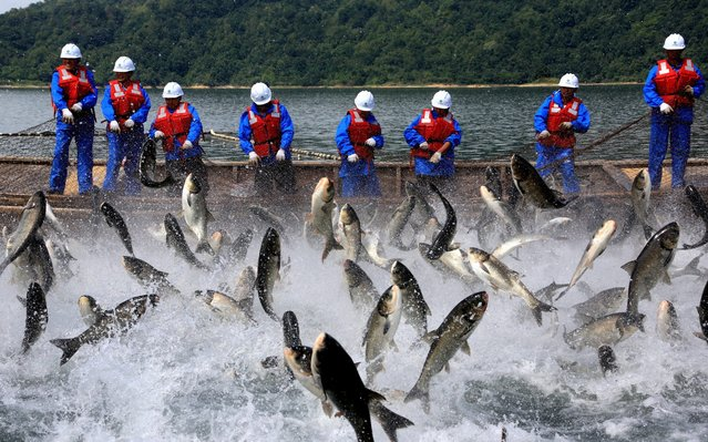 Fishing team members pull a fishing net with its catch at Huangshan Taiping Lake on May 21, 2019 in Huangshan, Anhui Province of China. (Photo by Pan Cheng/VCG via Getty Images)