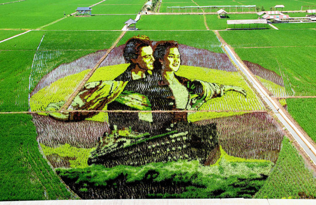 This photo taken on June 30, 2019 shows an image of the the movie Titanic created using different varieties of rice in a paddy in Shenyang in China's northeastern Liaoning province. (Photo by AFP Photo/China Stringer Network)