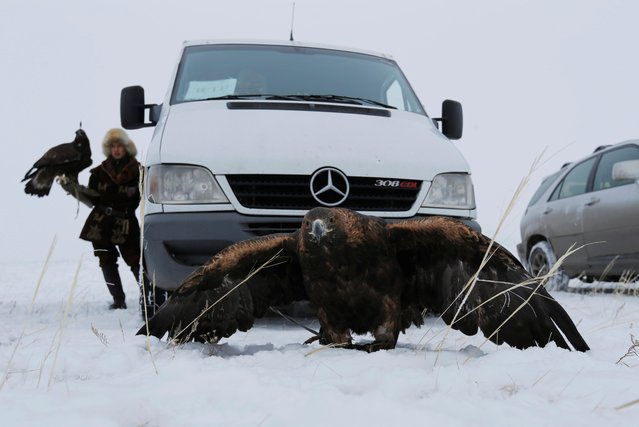 A tamed golden eagle sits near the car during a traditional hunting contest outside the village of Kaynar in Almaty region, Kazakhstan on December 7, 2019. (Photo by Pavel Mikheyev/Reuters)
