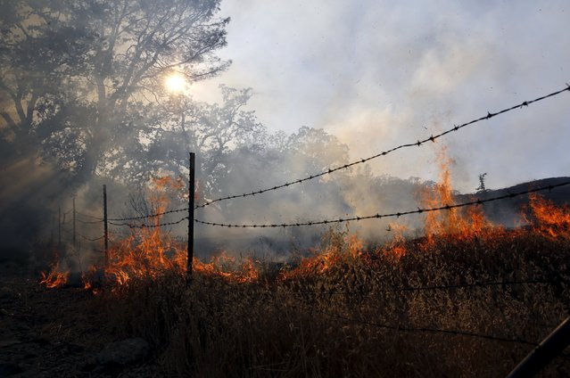 Fire from the Jerusalem Fire burns along Morgan Valley Road in Lake County, California August 12, 2015. (Photo by Robert Galbraith/Reuters)
