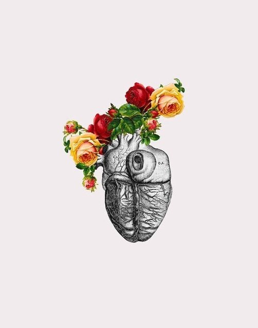 Anatomy And Roses By MizEnScen