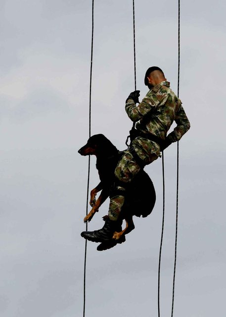 A Colombian Army Special Forces soldier rappels with a dog, in a show of military exercises at the Tolemaida military base, during a visit by U.S. Defense Secretary Chuck Hagel, in Melgar, Colombia, Friday, October 10, 2014. Colombia was Hagel's first stop on his six-day, three-country trip to South America. Hagel will also travel to Chile and Peru, where he will attend a conference of defense ministers from the Americas. (Photo by Fernando Vergara/AP Photo)