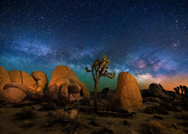 Joshua Tree in California. (Photo by Wayne Pinkston/Caters News)