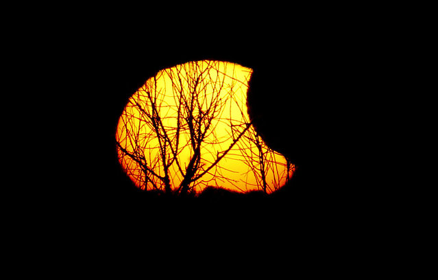 Tree branches are silhouetted against the sun during a partial eclipse as seen from Paynes Prairie Thursday, October 23, 2014, in Gainesville, Fla. (Photo by Matt Stamey/AP Photo/The Gainesville Sun)