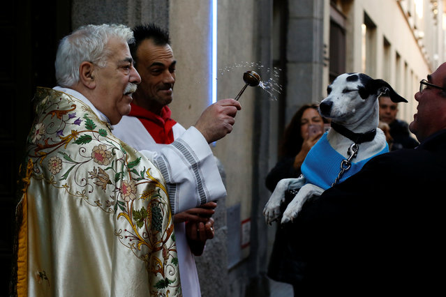 A priest blesses a dog outside San Anton Church in Madrid, Spain, January 17, 2018. (Photo by Susana Vera/Reuters)
