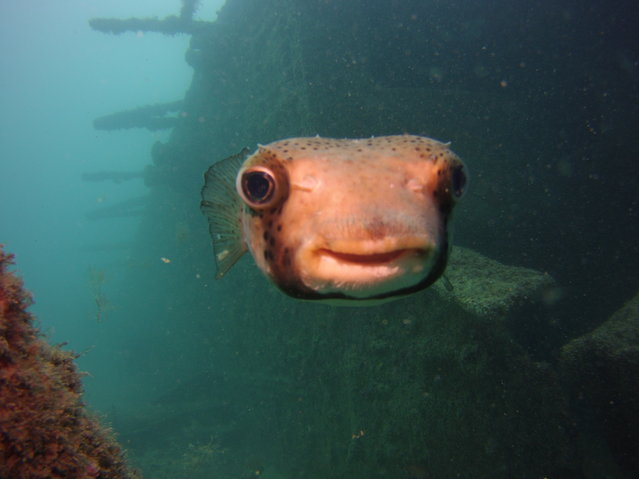 This image was taken off Sal, Cape Verde of the happiest fish in the world pictured by Craig Moore for the Comedy Wildlife Photo Awards 2016, Sal, Cape Verde, July, 2016. (Photo by Craig Moore/Barcroft Images/Comedy Wildlife Photo Awards)