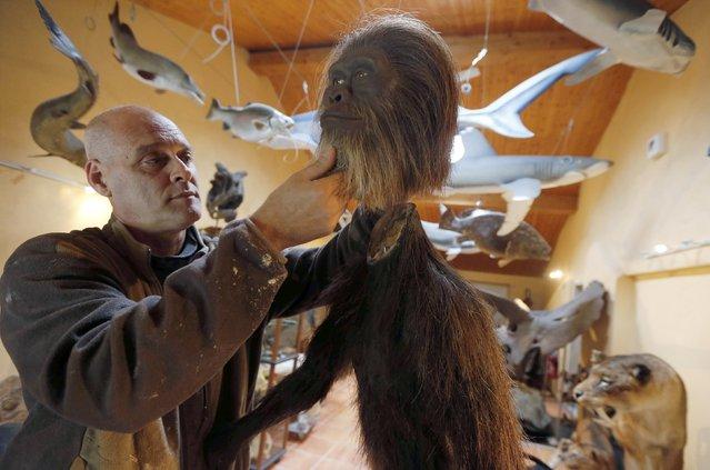Belgian animal sculptor Emmanuel Janssens Casteels works on a replica of an Australopithecus in his workshop in Prayssas December 3, 2014. (Photo by Regis Duvignau/Reuters)