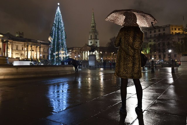 A woman photographs a Norwegian spruce Christmas tree from Oslo after it was lit at Trafalgar Square in central London, December 4, 2014. (Photo by Toby Melville/Reuters)
