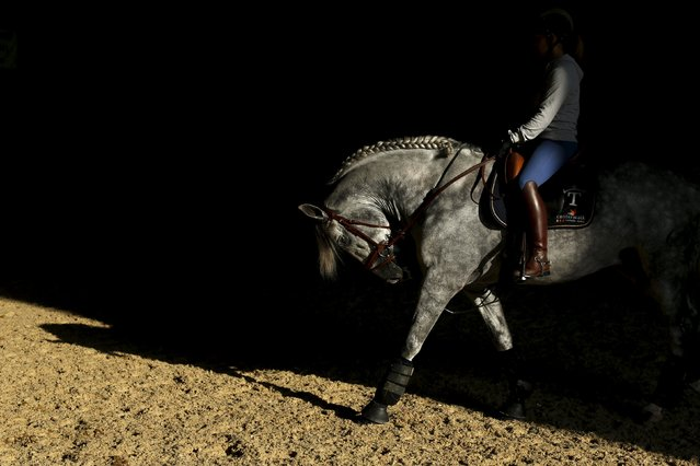 A woman rides a purebred Spanish horse during the Sicab International Pre Horse Fair which is dedicated in full and exclusively to the purebred Spanish horse in the Andalusian capital of Seville, southern Spain November 17, 2015. (Photo by Marcelo del Pozo/Reuters)