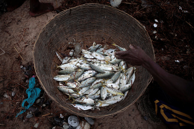 A fisherman puts fishes in a basket after Hurricane Matthew in Les Cayes, Haiti, October 20, 2016. (Photo by Andres Martinez Casares/Reuters)