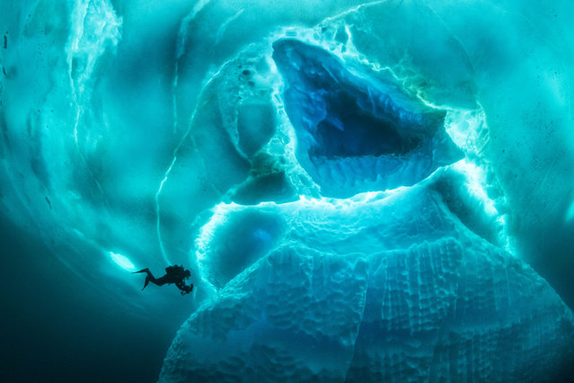 Other images show some of the weird and wonderful creatures divers can encounter in that part of the ocean. (Photo by Franco Banfi/Caters News Agency)