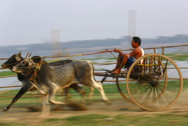 A man rides an ox cart during an ox cart competition near U Bein bridge in Mandalay March 22, 2015. (Photo by Soe Zeya Tun/Reuters)