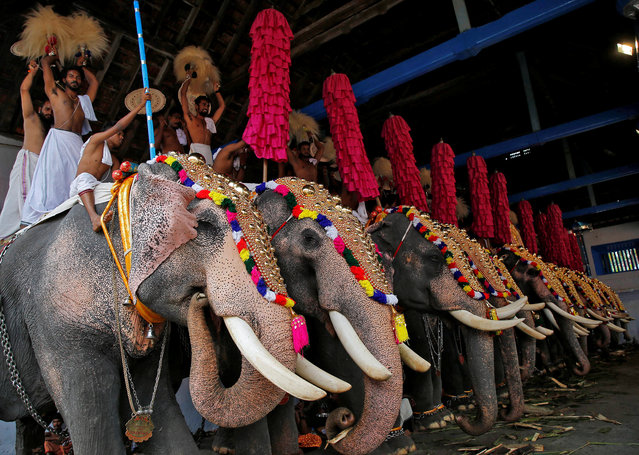 People stand on caparisoned elephants during the annual eight-day long Vrischikolsavam festival, which features a colourful procession of decorated elephants along with drum and trumpets concerts, at Sree Poornathrayeesa temple in Kochi, December 5, 2018. (Photo by Sivaram V/Reuters)