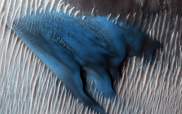 A field of barchan sand dunes appear turquoise blue on the surface of Mars in this enhanced image taken by the Mars Reconnaissance Orbiter, January 24, 2018. (Photo by NASA/JPL-Caltech/University of Arizona/Handout via Reuters)