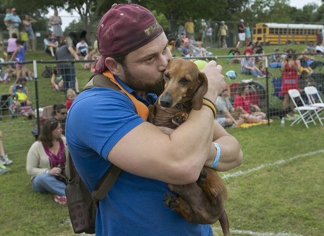 Bill Brumley hugs his dog Spanky after he qualified for the quarterfinals. The 18th Annual Buda County Fair and Weiner Dog Races was held at city park in Buda Sunday April 26, 2015 sponsored by the Lions Club. (Photo by Ralph Barrera/Austin American-Statesman)