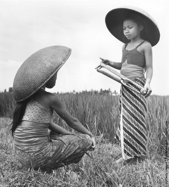 1950: Two girls wearing large sunhats in a rice field in Indonesia, one holding a bamboo clapper