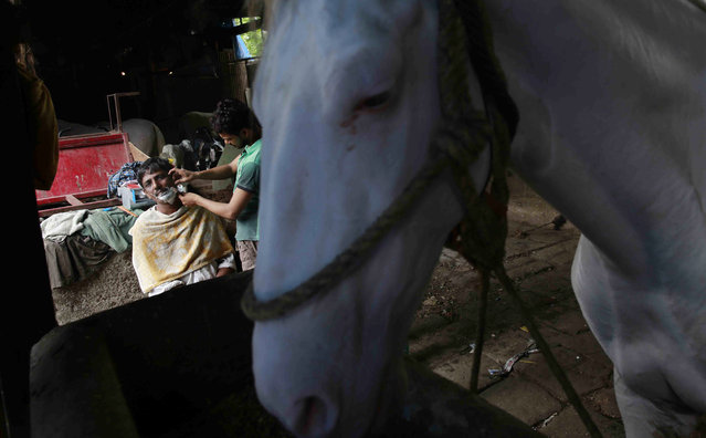 In this June 16, 2015 photo, carriage owner Varma Ramnarayan gets a shave at a stable in Mumbai, India. (Photo by Rafiq Maqbool/AP Photo)