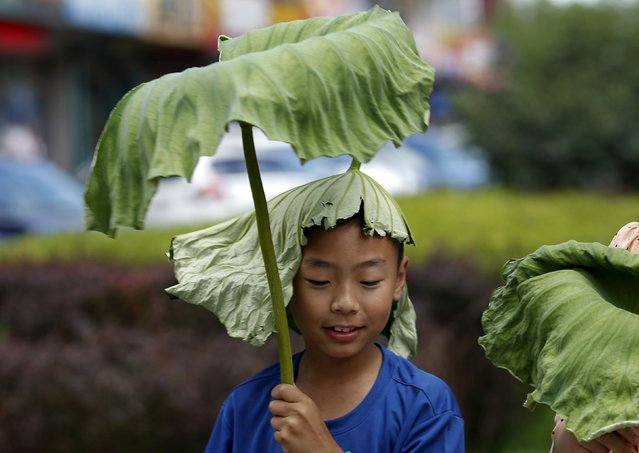 A boy wearing a lotus leaf on his head holds onto another leaf on a hot summer day in Beijing, China, July 2, 2015. (Photo by Kim Kyung-Hoon/Reuters)