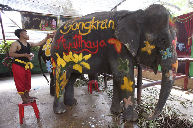Mahout paint elephants at Songkran or ancient Thai New Year celebration in Ayutthaya province, central Thailand Tuesday, April 11, 2017. (Photo by Sakchai Lalit/AP Photo)