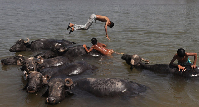 Indian nomad youths play in the water with their herd of buffaloes as they cool off in the Tawi River on a hot day on the outskirts of Jammu on April 20, 2017. Heatwave conditions in northern Jammu and Kashmir state saw temperatures push past 41 degrees celsius. (Photo by AFP Photo/Stringer)
