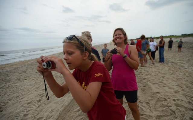Sundene Lodge of Milford, Del. snaps a photograph of the northern Chincoteague Pony herd as it approaches on Monday morning, July 27, 2015. Spectators gathered at the beach before sunrise to catch a glimpse of the pony herd  being brought to the pony corral in preparation for Wednesday's 90th annual Chincoteague Pony Swim. (Photo by Jay Diem/AP Photo/Eastern Shore News)