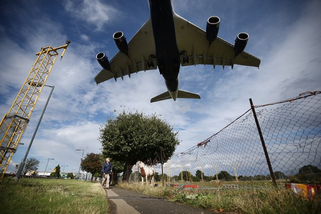 A passenger plane comes into land over a field containing horses at Heathrow Airport on August 11, 2014 in London, England. Heathrow is the busiest airport in the United Kingdom and the third busiest in the world. The airport's operator BAA wants to build a third runway to cope with increased demand. (Photo by Peter Macdiarmid/Getty Images)