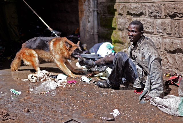 A suspected looter is restrained by a policeman with a dog in the somali district of Eastleigh in Nairobi on November 19, 2012. Police used tear gas and fired into the air to contain the violence which erupted after a bomb exploded in Eastleigh on November 18 2012 killing seven people and wounding many more. Kenyan residents in Eastleigh turned on Somalis and attacked their shops and stalls, accusing them of being responsible for the bomb. (Photo by Carl De Souza)