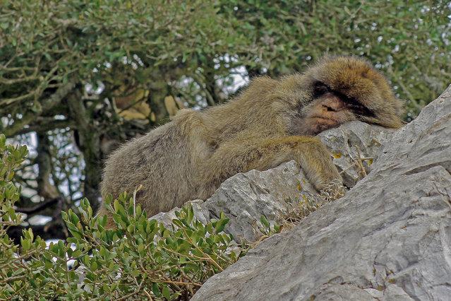 'Fed up'. (Photo by Tony Murtagh/Comedy Wildlife Photography Awards/Mercury Press)