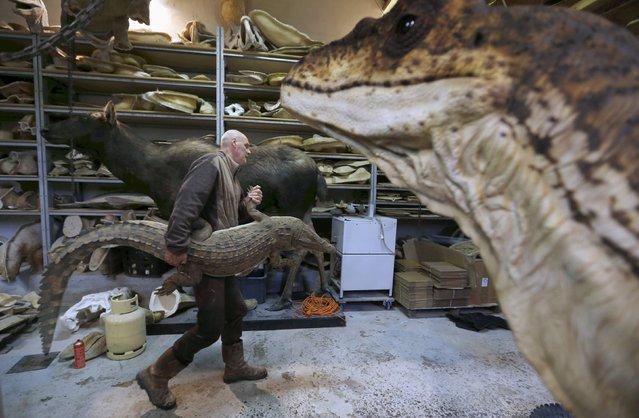 Belgian animal sculptor Emmanuel Janssens Casteels holds a replica of a prehistoric crocodile in his workshop in Prayssas December 3, 2014. (Photo by Regis Duvignau/Reuters)