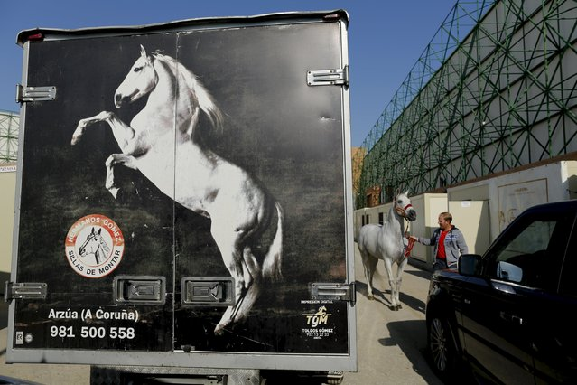 A man pulls a purebred Spanish horse during the Sicab International Pre Horse Fair which is dedicated in full and exclusively to the purebred Spanish horse in the Andalusian capital of Seville, southern Spain November 17, 2015. (Photo by Marcelo del Pozo/Reuters)