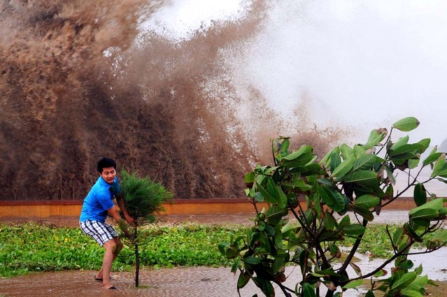Huge waves crash behind a tourist as he grabs a shrub in strong winds during the passage of tropical storm Conson at the northern coastal city of Hai Phong, Vietnam. (Photo by AFP Photo/Getty Images)