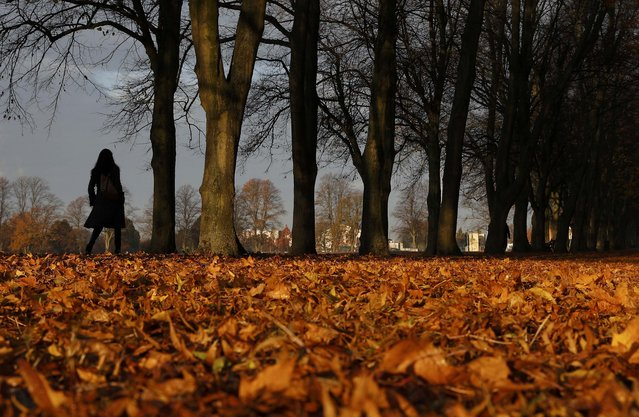 A woman walks through fallen leaves on Victoria Park in Leicester, Britain, November 8, 2016. (Photo by Darren Staples/Reuters)