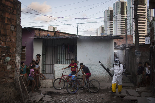 Young residents run away and others cover their faces as municipal worker sprays insecticide to combat the Aedes aegypti mosquitoes that transmits the Zika virus at the Imbiribeira neighborhood in Recife, Pernambuco state, Brazil, Tuesday, January 26, 2016. Brazil's health minister Marcelo Castro said that nearly 220,000 members of Brazil's Armed Forces would go door-to-door to help in mosquito eradication efforts ahead of the country's Carnival celebrations. (Photo by Felipe Dana/AP Photo)