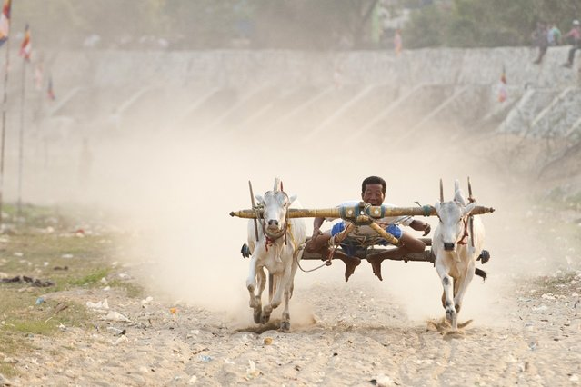 A man competes during an ox cart competition near U Bein bridge in Mandalay, the second largest city in Myanmar, on March 22, 2015. (Photo by Ye Aung Thu/AFP Photo)
