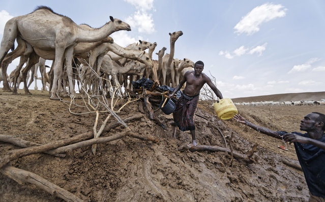 "Camel herders scoop up water in plastic buckets from one of the few watering holes in the area, to water their animals near the drought-affected village of Bandarero, near Moyale town on the Ethiopian border, in northern Kenya, Friday, March 3, 2017. The U.N. humanitarian chief, Stephen O'Brien, toured Bandarero village on Friday and called on the international community to act to ""avert the very worst of the effects of drought and to avert a famine to make sure we don't go from what is deep suffering to a catastrophe"". (Photo by Ben Curtis/AP Photo)"