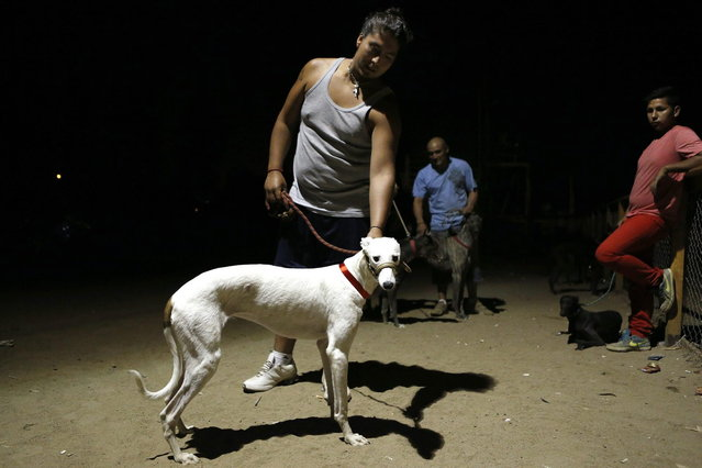 A greyhound owner poses for a picture during a race at Santiago city, February 16, 2014. (Photo by Ivan Alvarado/Reuters)