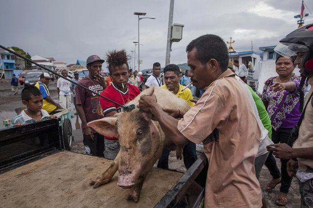"""Catholic worshippers carry a pig from a wooden boat on their way to attend Holy Week celebrations, known as """"Semana Santa"""" on April 17, 2014 in Larantuka, East Nusa Tenggara, Indonesia. Easter celebrations in Larantuka started in the 16th century, when Portuguese missionaries entered and acculturated the local people. The ritual appeals to the pilgrims and people from various regions in Indonesia, who come to follow the procession. (Photo by Ulet Ifansasti/Getty Images)"""