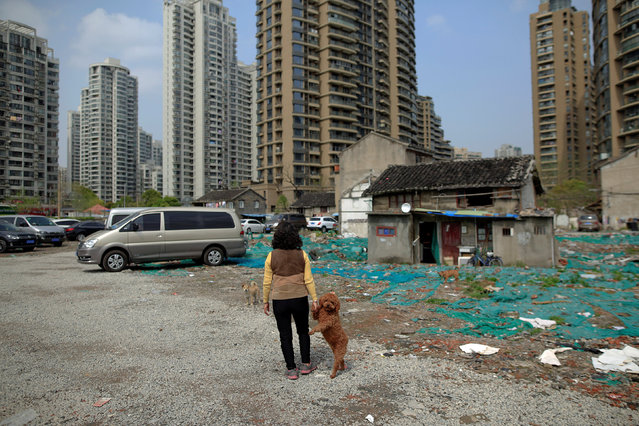 A women surnamed Li walks her dog in Guangfuli neighbourhood, in Shanghai, China, April 8, 2016. (Photo by Aly Song/Reuters)