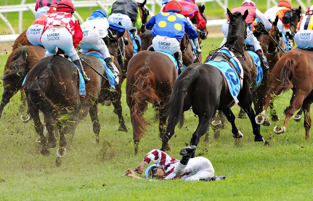 Vlad Duric escapes serious injury after falling off Golfing in in the home straight in Race 5, the Bert Bryant Handicap  during Melbourne Racing at Caulfield Racecourse on April 19, 2014 in Melbourne, Australia. Duric walked away  with a minor leg injury. (Photo by Vince Caligiuri/Getty Images)