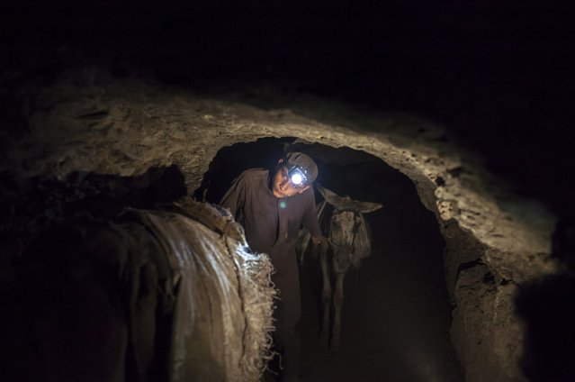A young miner leads his team of donkeys back to the coal face underground in Choa Saidan Shah in Punjab province April 29, 2014. (Photo by Sara Farid/Reuters)